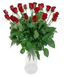 Erzincan çiçek online çiçek siparişi  11 adet kimizi gülün ihtisami cam yada mika vazo modeli