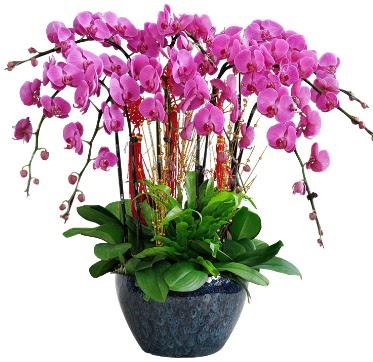 9 dallı mor orkide  Erzincan ucuz çiçek gönder