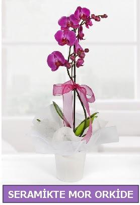Seramik içerisinde birinci kalite tek dallı mor orkide  Erzincan uluslararası çiçek gönderme