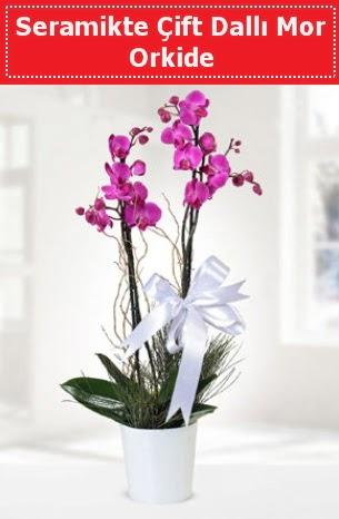 Seramikte Çift Dallı Mor Orkide  Erzincan hediye çiçek yolla