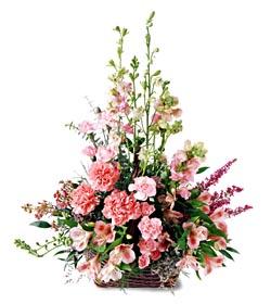 Erzincan kaliteli taze ve ucuz çiçekler  mevsim çiçeklerinden özel