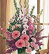 Erzincan çiçekçi mağazası  Tanzim Mevsim çiçeklerinden