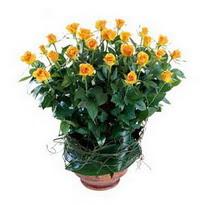 Erzincan çiçek satışı  10 adet sari gül tanzim cam yada mika vazoda çiçek