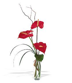 Erzincan online çiçekçi , çiçek siparişi  cam yada mika Vazoda 3 adet  antoryum