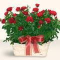 Erzincan uluslararası çiçek gönderme  11 adet kirmizi gül sepette