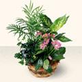 Erzincan çiçek servisi , çiçekçi adresleri  5 adet canli çiçek sepette