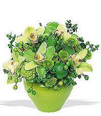 cam yada mika vazoda 5 adet orkide   Erzincan cicek , cicekci