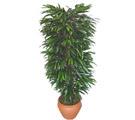 Erzincan online çiçekçi , çiçek siparişi  Özel Mango 1,75 cm yüksekliginde