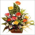 sepet içerisinde gerberalar   Erzincan ucuz çiçek gönder