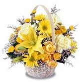 sadece sari çiçek sepeti   Erzincan 14 şubat sevgililer günü çiçek