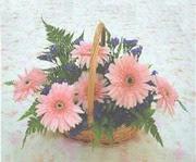 gerbera çiçeklerinde sepet   Erzincan anneler günü çiçek yolla