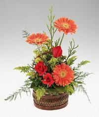 Erzincan çiçek satışı  sepet içerisinde 3 gül ve 3 gerbera tanzimi