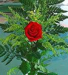 1 adet kirmizi gül buketi   Erzincan çiçek yolla