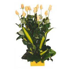 12 adet beyaz gül aranjmani  Erzincan internetten çiçek siparişi
