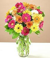 Erzincan çiçek siparişi sitesi  17 adet karisik gerbera