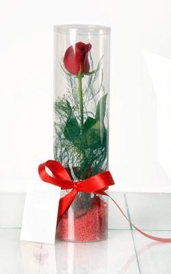 Erzincan anneler günü çiçek yolla  Silindir vazoda tek kirmizi gül