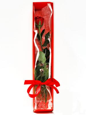 Erzincan online çiçek gönderme sipariş  1 adet kutuda gül