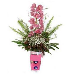 Erzincan güvenli kaliteli hızlı çiçek  cam yada mika vazo içerisinde tek dal orkide çiçegi