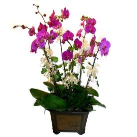 Erzincan çiçekçi telefonları  4 adet orkide çiçegi