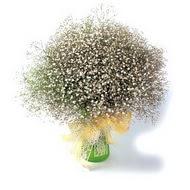Erzincan çiçekçiler  cam yada mika vazo içerisinde cipsofilya demeti