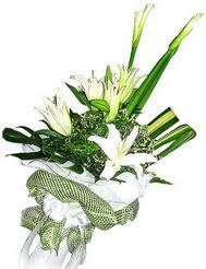 Erzincan çiçek siparişi vermek  3 dal kazablanka çiçegi ve yesillikler