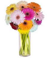 Erzincan çiçek gönderme sitemiz güvenlidir  Farkli renklerde 15 adet gerbera çiçegi