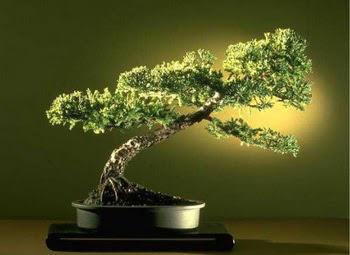 ithal bonsai saksi çiçegi  Erzincan yurtiçi ve yurtdışı çiçek siparişi