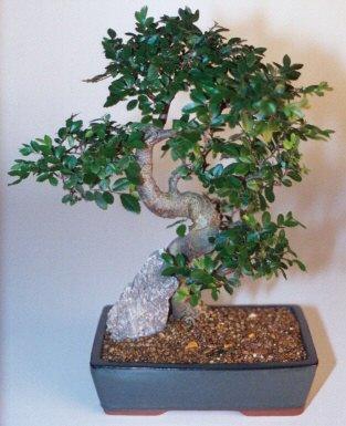 Erzincan 14 şubat sevgililer günü çiçek  ithal bonsai saksi çiçegi  Erzincan online çiçekçi , çiçek siparişi
