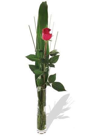 1 adet cam vazo içerisinde kirmizi gül  Erzincan çiçek mağazası , çiçekçi adresleri