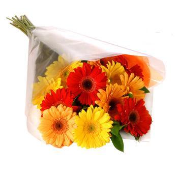 Karisik renklerde gerbera buketi  Erzincan çiçek satışı