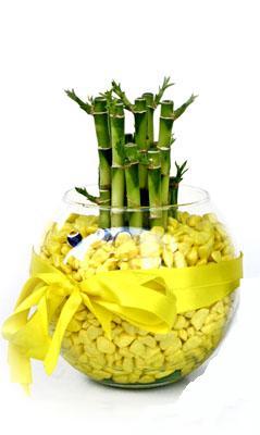 cam fanus içerisinde bambo  Erzincan çiçek yolla , çiçek gönder , çiçekçi