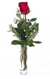Vazo içerisinde 1 adet kirmizi gül  Erzincan çiçek satışı