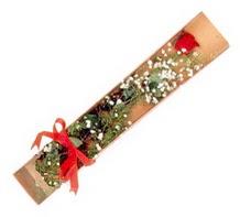 1 adet kirmizi gül  Erzincan çiçek online çiçek siparişi