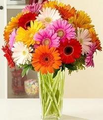 Erzincan internetten çiçek satışı  15 adet gerbera çiçek vazosu