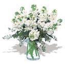 Erzincan çiçekçi telefonları  Vazoda beyaz güzel sebboylar