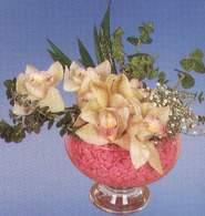 Erzincan çiçekçiler  Dal orkide kalite bir hediye