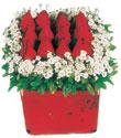 Erzincan hediye sevgilime hediye çiçek  Kare cam yada mika içinde kirmizi güller - anneler günü seçimi özel çiçek