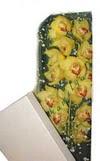 Erzincan hediye sevgilime hediye çiçek  Kutu içerisine dal cymbidium orkide