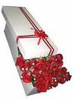 Erzincan çiçek online çiçek siparişi  11 adet 1.kalite magnum güller