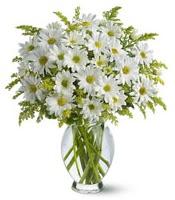 Vazo içerisinde beyaz krizantem çiçekleri  Erzincan yurtiçi ve yurtdışı çiçek siparişi