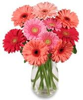 vazo içerisinde 13 adet gerbera çiçeği  Erzincan online çiçekçi , çiçek siparişi