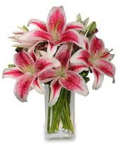 Vazo içerisinde 5 dal kazablanka çiçeği  Erzincan çiçek satışı