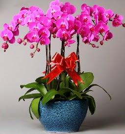 7 dallı mor orkide  Erzincan çiçek siparişi sitesi