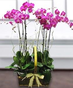 4 dallı mor orkide  Erzincan çiçek siparişi vermek
