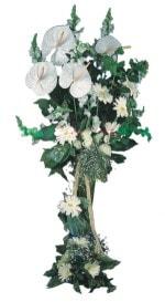 Erzincan çiçekçiler  antoryumlarin büyüsü özel