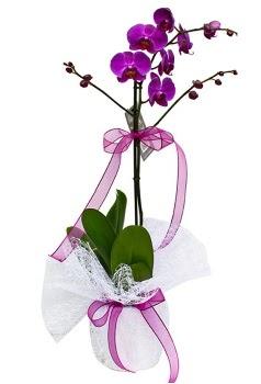 Tek dallı mor orkide  Erzincan çiçek online çiçek siparişi