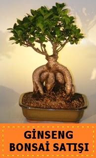 Ginseng bonsai satışı japon ağacı  Erzincan çiçekçi telefonları