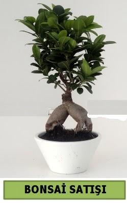 Bonsai japon ağacı satışı  Erzincan internetten çiçek satışı