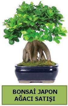 Bonsai japon ağacı satışı  Erzincan çiçek servisi , çiçekçi adresleri