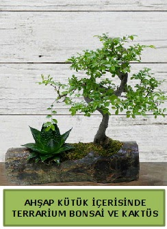 Ahşap kütük bonsai kaktüs teraryum  Erzincan çiçek gönderme sitemiz güvenlidir